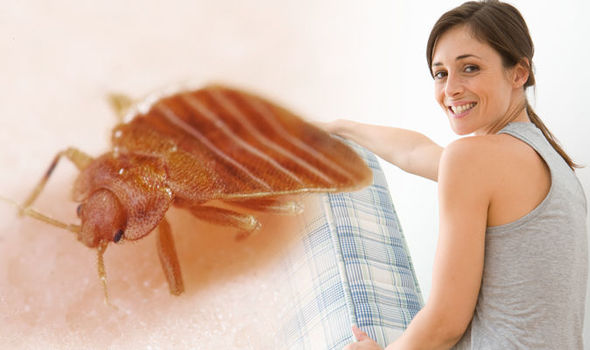 Bed bug bites: Stop bed bugs getting in your mattress and biting you with this top tip
