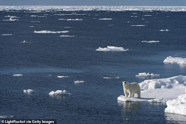 The Arctic could soon be completely free of sea ice each year during its transition from summer to winter, even if we hit temperature goals proposed by the Paris Agreement, a shocking new study has found. File photo