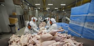 Some meat processing plants in the US rinse chicken carcasses in water mixed with chlorine – which is used to make bleach – in order to kill bacteria which could cause food poisoning, but the practice is banned in the EU because it threatens animal welfare (stock image)