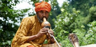 Premature babies who are played music – particularly that of the Indian snake charmer