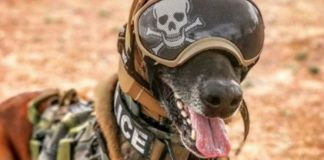 The Canine Auditory Protection System (CAPS)