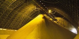 Pictured: Soy in a silo in Itacoatiara, Brazil that will be loaded on ships for export. Greenpeace claims 1.4 million hectares of land — an area greater than Northern Ireland — is needed every year to produce enough grain to feed the UK