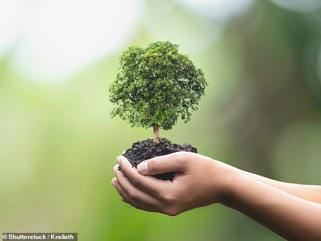 Daunting: ESG – environmental, sustainable and governance – is the acronym du jour and the field is bursting with tiresome technical terms in an area few of us will fully understand