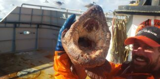 """Nate Iszacthey said the crew were """"cautious"""" when they saw the enormous wolf eel because they """"can bite very hard"""""""