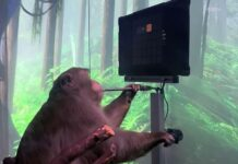 The monkey is playing a game of pong with the joystick unplugged