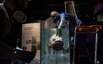TOPSHOT - Taxidermists install a coelacanth in a formol-filled tank for the