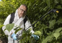Menace: Our reporter Toby Walne sprays the dreaded Japanese knotweed