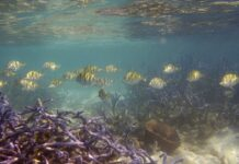 Coral reef cover has diminished in size by more than half since the 1950s due to climate change, overfishing, pollution and other human impacts, a study has found