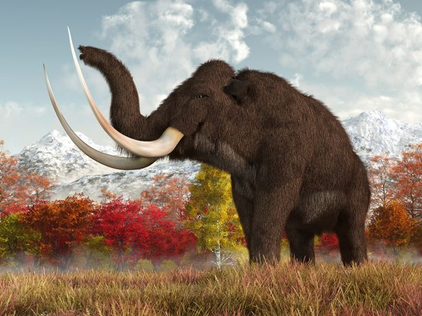 Woolly mammoths have been extinct for tens of thousands of years